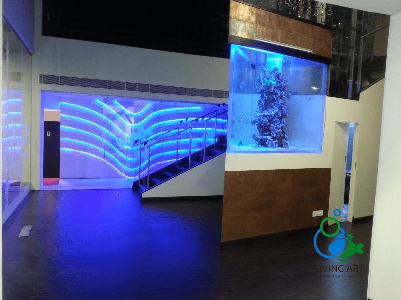 """""""Aquarium Builder in Chennai"""""""