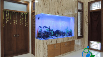 """Home Aquarium in Chennai"""