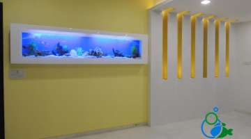 """wall fish tank in chennai"""