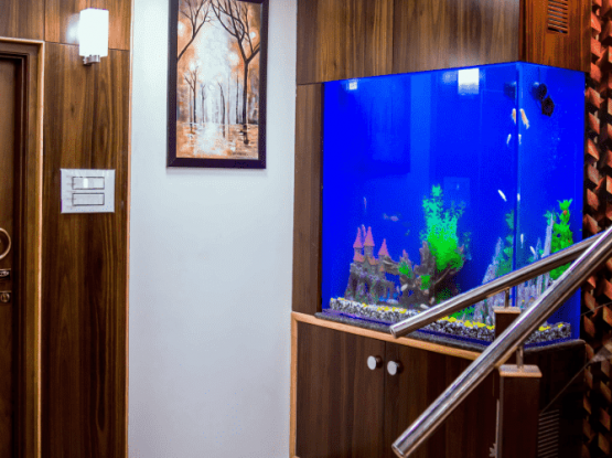 """acrylic aquarium tank manufacturing in chennai"""