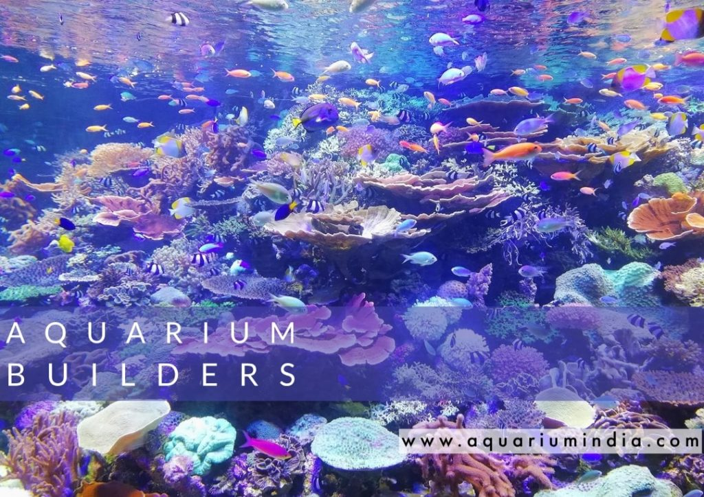 """Aquarium Builder in Chennai"""