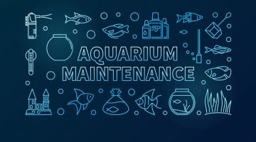 """""""Fish Tank Cleaning Service in Chennai"""""""